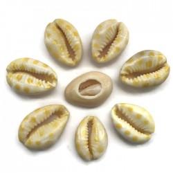 Muszelki kauri naturalne - 20~26x13~18x5~7mm - kropki żółty