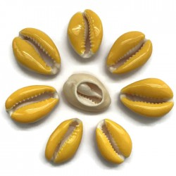 Muszelki kauri naturalne - 20~26x13~18x5~7mm - żółty